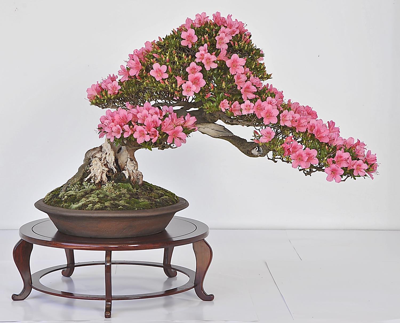 Animal Jam Bonsai Tree Bonsai Tree